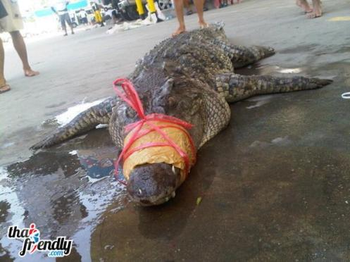 Thai crocodile